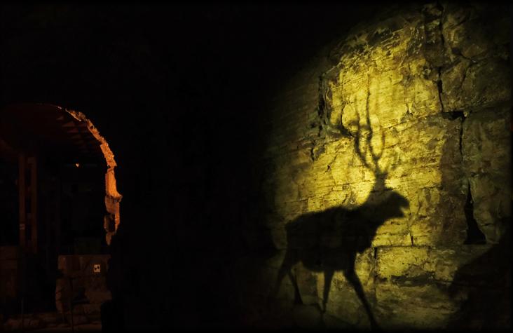 Ombra di cervo su un muro